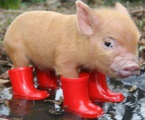 люди, рожденные в год земляной свиньи