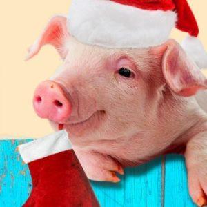 Человек, рожденный в год Свиньи
